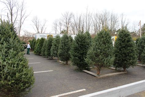christmastree lot utah tree lot celebrating our 51st year in 2018 centerville noon optimist