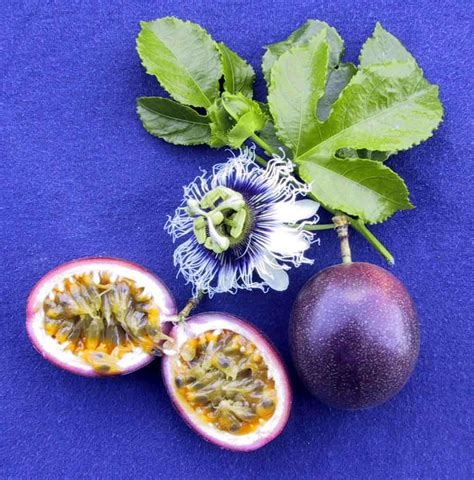 fruit flower parchas passion fruit fruits from around the world