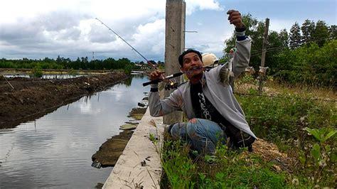Bibit Ikan Nila Di Banda Aceh mancing ikan nila di parit besar