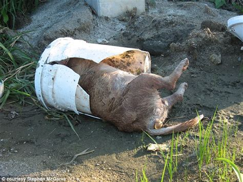 dead dogs stephen mcgarva s crusade to save strays dumped on dead daily mail