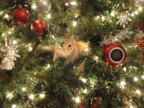 Social pets cats in christmas trees get leashed magazine