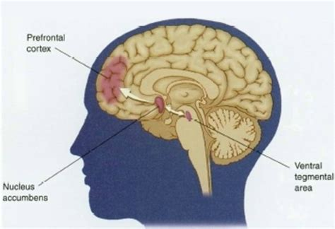 Detox The Cortex by The Brain And Addiction
