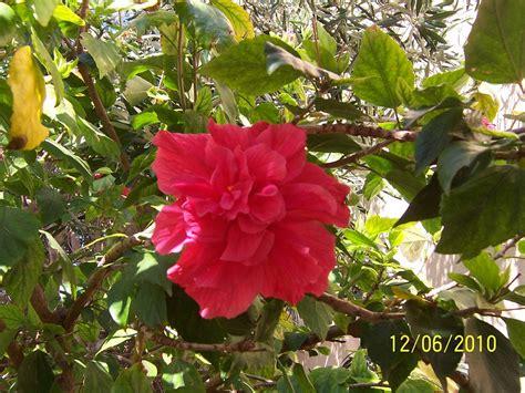 imagenes de flores ornamentales diferentes plantas ornamentales pictures