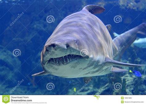 red viagra shark haai royalty vrije stock afbeeldingen beeld 18001889
