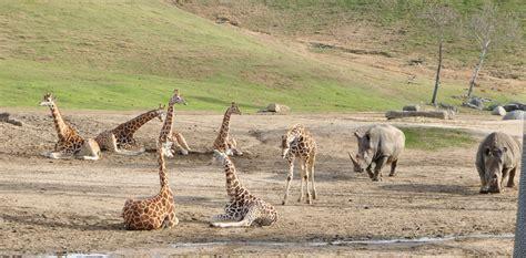 San diego zoo safari park www pixshark com images galleries with a bite