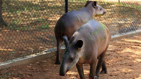 fotos animales zoo roban animales en un zoo de venezuela para poder comer