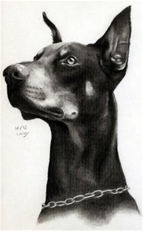 how to doberman 1000 images about drawing on how to draw landscape drawings and pencil