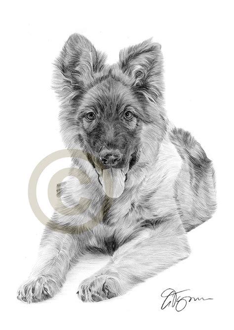 german shepherd puppy drawing german shepherd puppy pencil drawing artwork a4 size by uk artist ebay