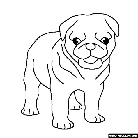pug colouring pages pug puppy coloring page