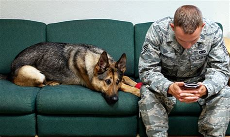 va service dogs provide service benefits for veterans with post traumatic stress disorder