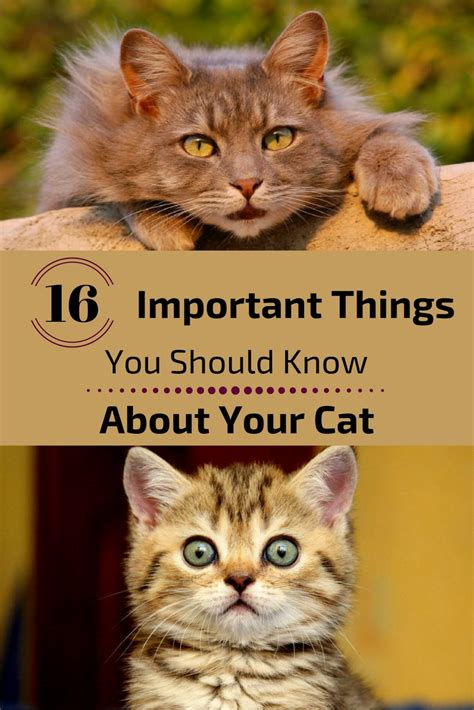 a few things you should know about colors before painting 16 things you should know about your cat zoomzee org