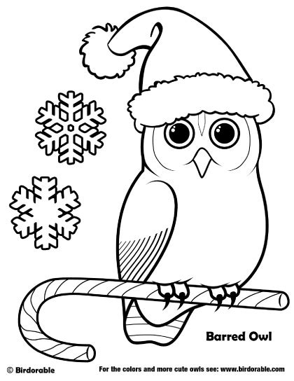 holiday owl coloring page birdorable barred owl christmas coloring page buhos