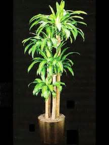 Indoor Low Light Plants by Indoor Plants Gallery The Potted Plant Scottsdale