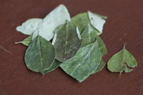 Through Glass and Prose: Coca Leaves