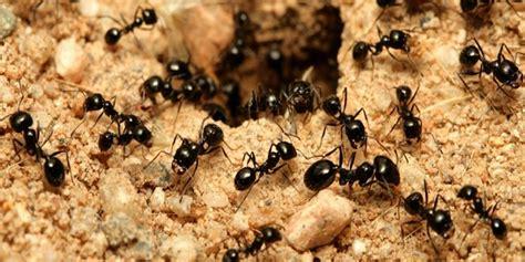 eliminare formiche giardino come eliminare le formiche da orto e giardino orto sul
