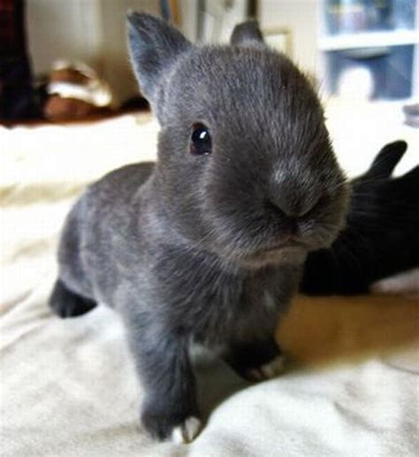 Cutest Animal Memes - cute bunny pictures that will make you say aww 30 pics