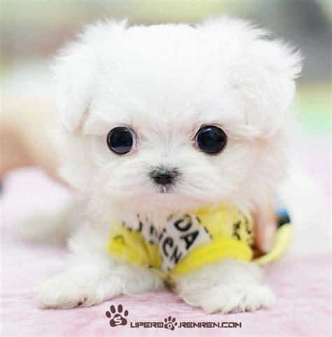 puppy that looks real this puppy doesn t look real dogs toys pets and puppys