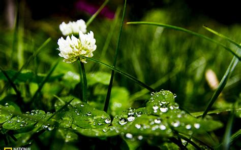 plant wallpaper photography green plants flower wallpapers free