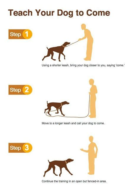 how to train your dog to use bathroom outside how to train your dog to use the bathroom outside 28