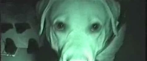 can dogs sense spirits in the house high spirits the ghost log blog 187 using dogs as paranormal investigators by