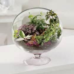 what to plant in a terrarium make a terrarium