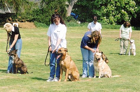 in house dog trainer dog training school dog trainers and practicing at home