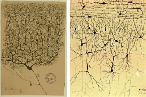 Cajal Neuron Drawings