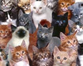 cats color vision color vision cat breeds