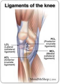 Every time you flex your knee those ligaments and muscle tissue move