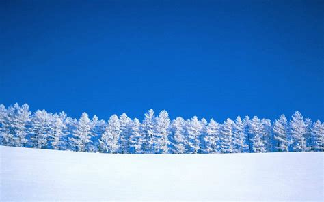 picture of snow snow row 1920 x 1200 forest photography miriadna com