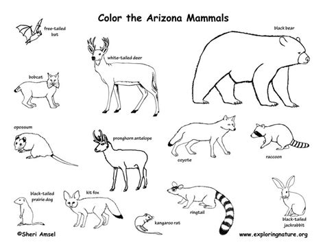 arizona state mammal coloring page coloring pages