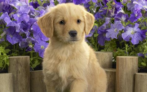 6 in 1 puppy puppy wallpaper android apps on play