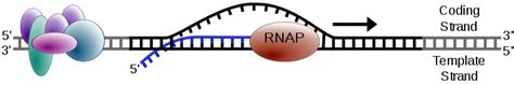 entrada medical transcription eventos phm journ 201 e nationales de soci 201 t 201 fran 199 aise de
