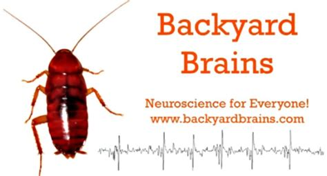 backyard brains roboroach control a cockroach s brain with a tweet thanks to chicago