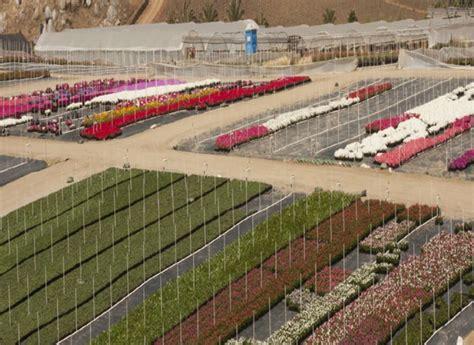 color spot nursery dm color express dm color express 187 dm color express