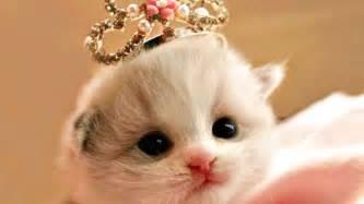 wallpaper anak kucing imut popi pebriani amd kucing terlucu dan terimut
