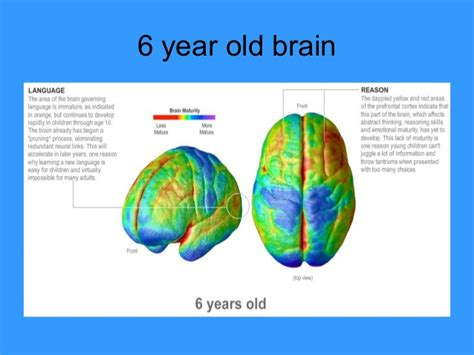 how is 6 in years the adolescent brain presentation module 3
