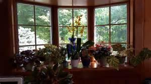 Plant Window Easy Care Plants For An East Window Gardendaze