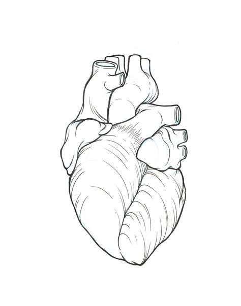 Galerry coloring page heart anatomy