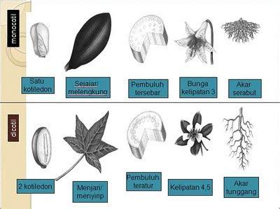 tumbuhan tingkat tinggi  tumbuhan tingkat rendah eka