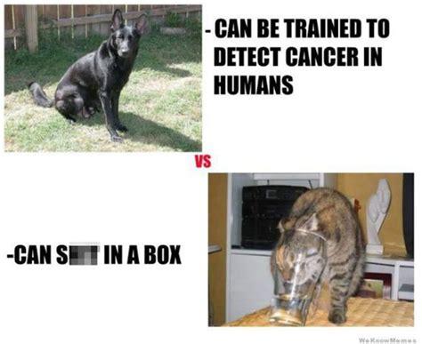 kittens vs puppies cats vs dogs ilovedogsandpuppies