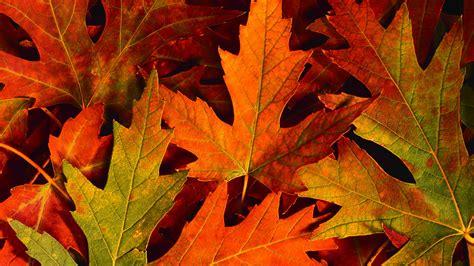 fall autumn autumn lima family farms