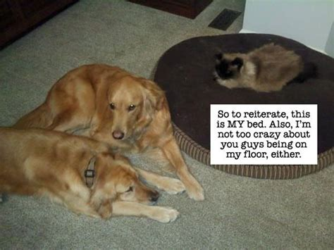cats and dogs living together dogs and cats living together 22 desktop background funnypicture org