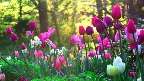Flower Garden Wallpapers Best Wallpapers Images Of Flower Gardens