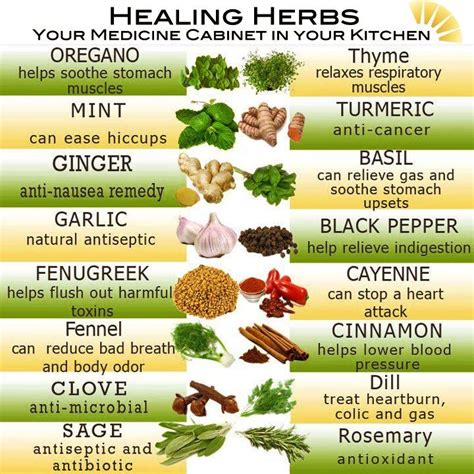 Nature Secrets With Hydrating Basil great foods for hydrating your skin allergy relief herbs and allergies