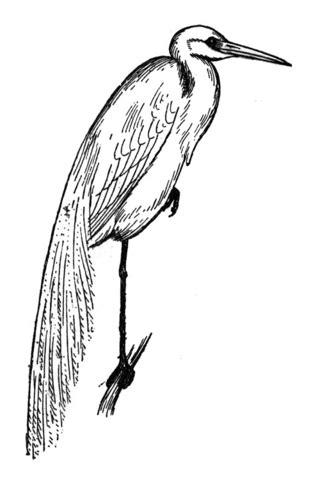 blue heron coloring page www pixshark com images