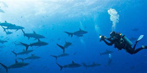 dive galapagos 8 best scuba diving on galapagos