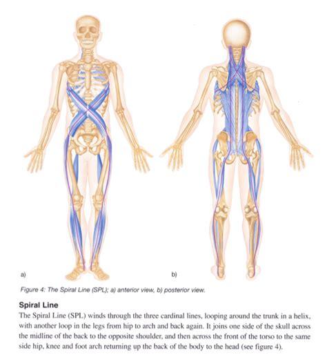 cadenas musculares thomas myers pdf ballet babble handling my first real foot injury that
