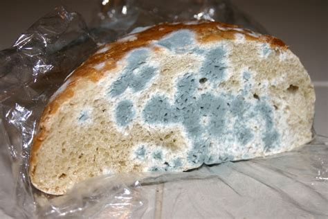 The Aspergillus Website blog: Mouldy Bread a Thing of the Past?