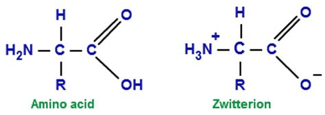 protein zwitterion topic 18b amines amides amino acids and proteins